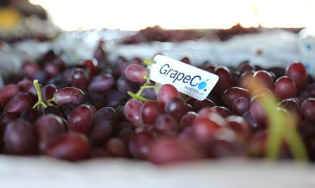 Grape Co: Australian Table Grapes