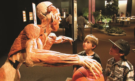 Body Worlds Vital Exhibition Launches In Sydney